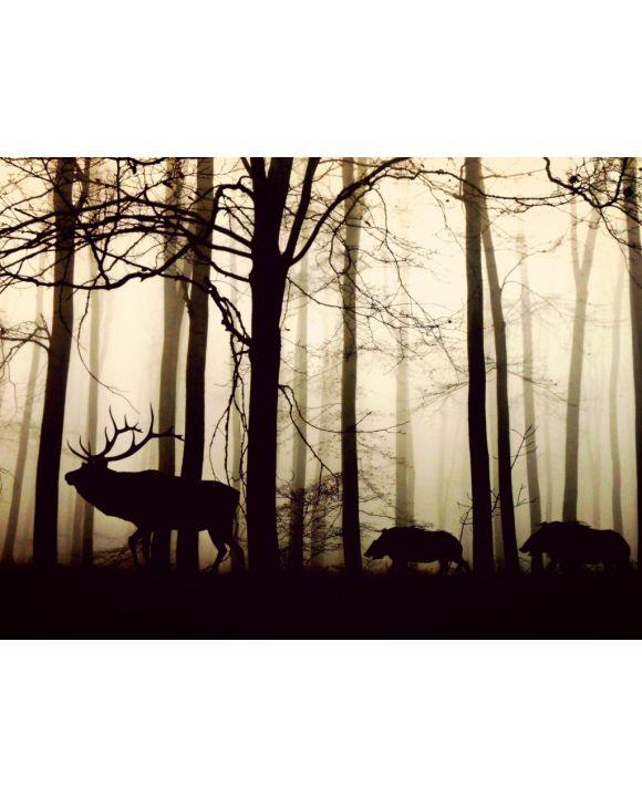 Lais Puzzle - Hirsche im Wald im Nebel - 1.000 Teile