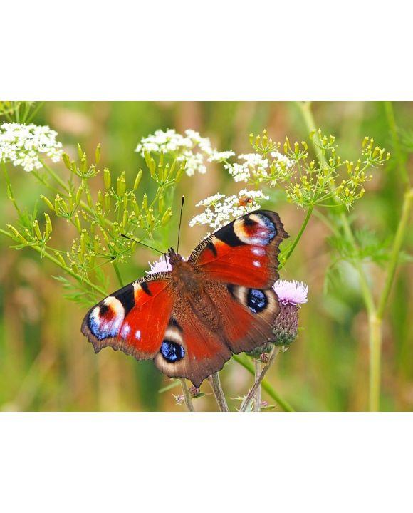 Lais Puzzle - Schmetterling - 200 Teile