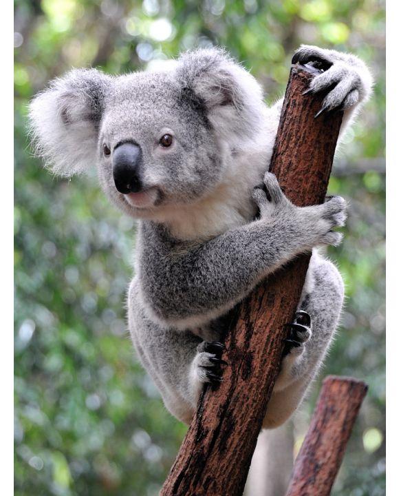 Lais Puzzle - Koala Australien - 100, 200, 500 & 1.000 Teile