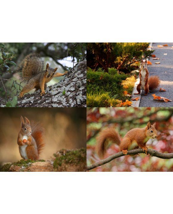 Lais Puzzle - Collage Eichhörnchen - 500 Teile