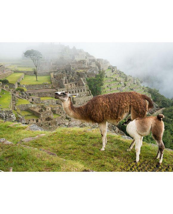 Lais Puzzle - Trinkendes Lama bei Machu Picchu - 2.000 Teile