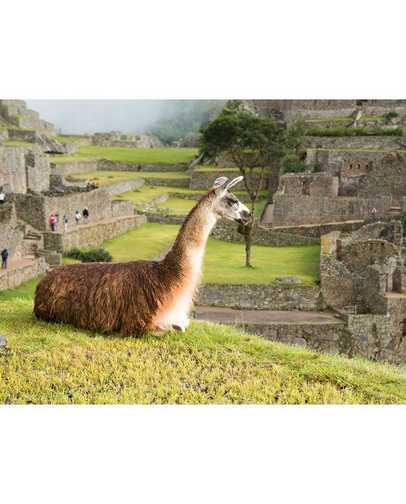 Lais Puzzle - Lama in Machu Picchu - 2.000 Teile
