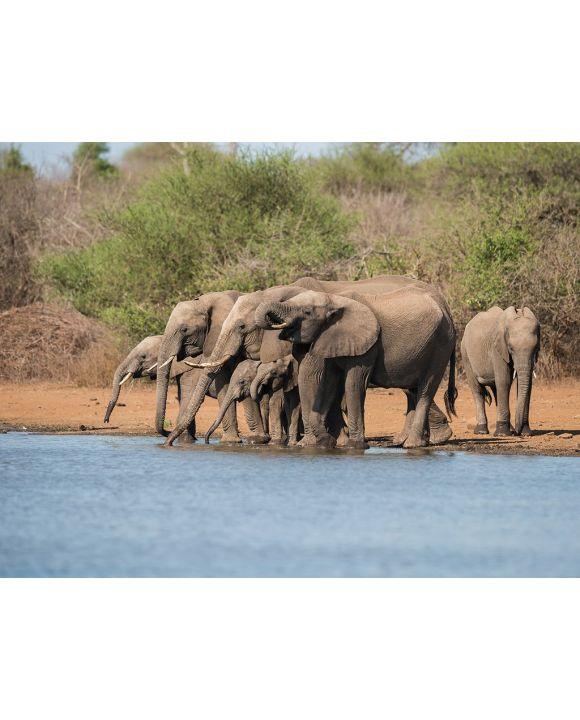 Lais Puzzle - Herde Elefanten im Krüger Nationalpark - 2.000 Teile