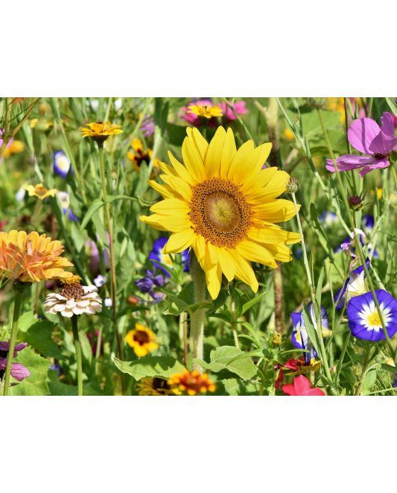 Lais Puzzle - Sonnenblume  - 500 Teile