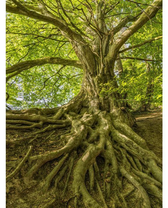 Lais Puzzle - Baum mit Wurzeln - 1.000 Teile