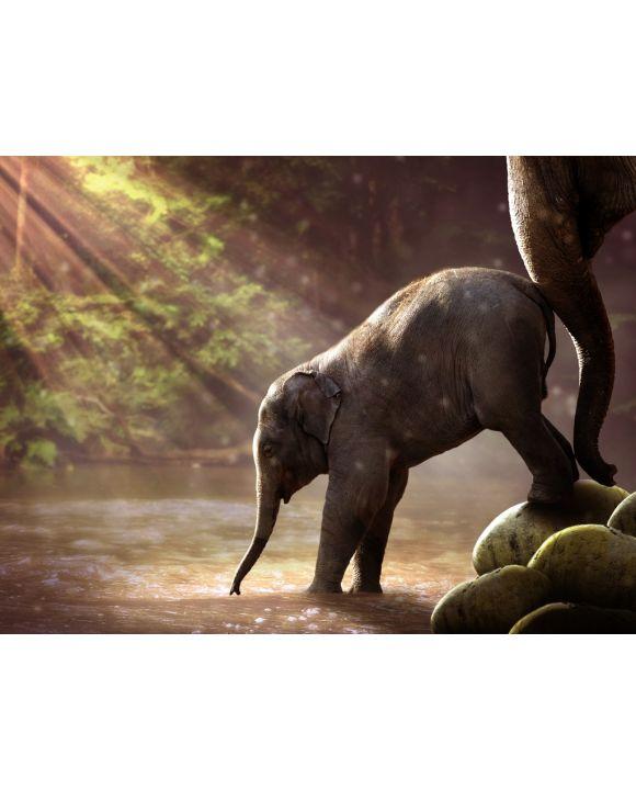 Lais Puzzle - Elefant - 1.000 Teile