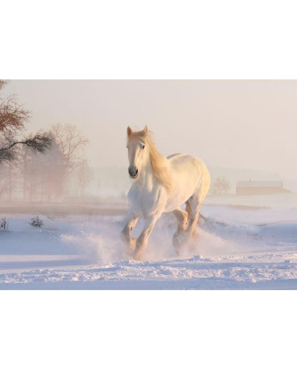 Lais Puzzle - Weißes Pferd im Schnee - 500 Teile