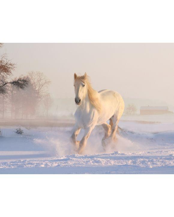 Lais Puzzle - Weißes Pferd im Schnee - 100, 200, 500, 1.000 & 2.000 Teile