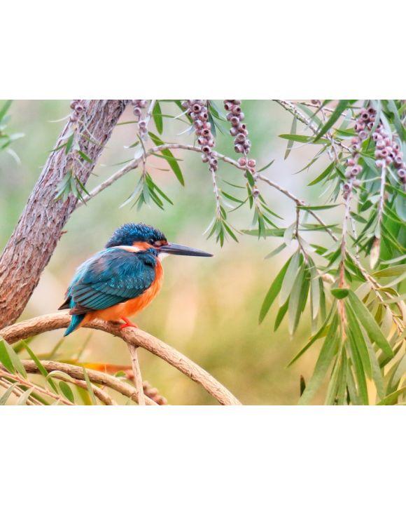 Lais Puzzle - Kingfisher Eisvogel - 500 & 1.000 Teile