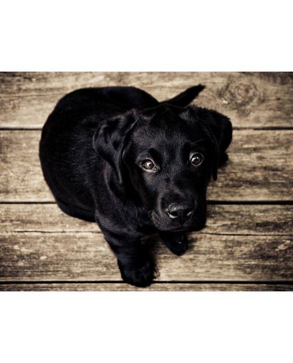 Lais Puzzle - Hund   - 100, 200, 500, 1.000 & 2.000 Teile