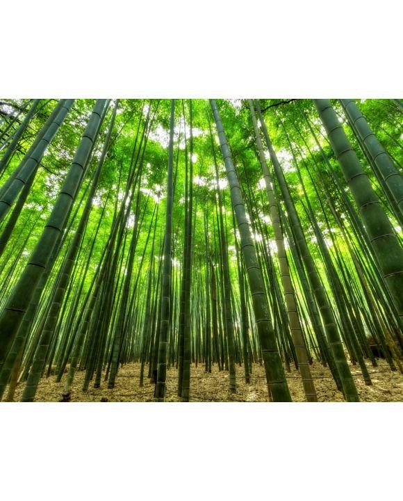 Lais Puzzle - Bambus - 100, 200, 500, 1.000 & 2.000 Teile
