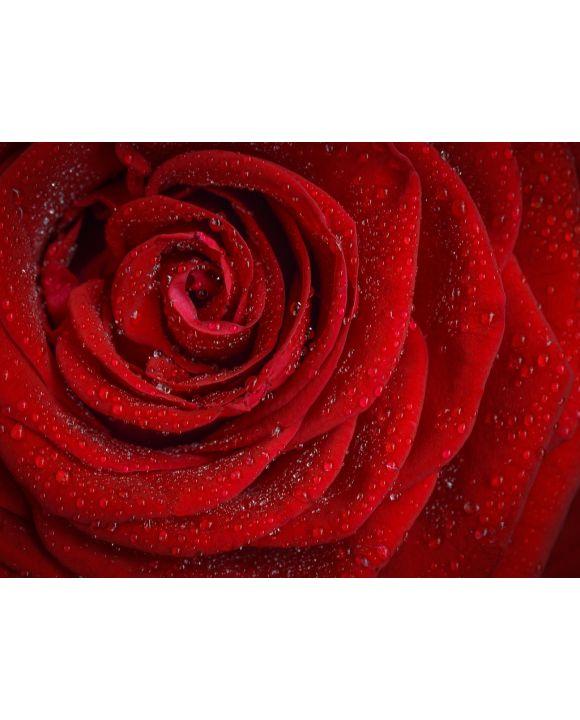 Lais Puzzle - Rote Rose - 1.000 Teile