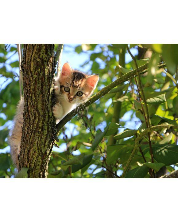Lais Puzzle - Katze im Baum - 100, 200, 500, 1.000 & 2.000 Teile