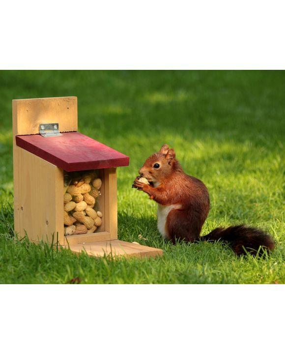Lais Puzzle - Eichhörnchen - 1.000 Teile