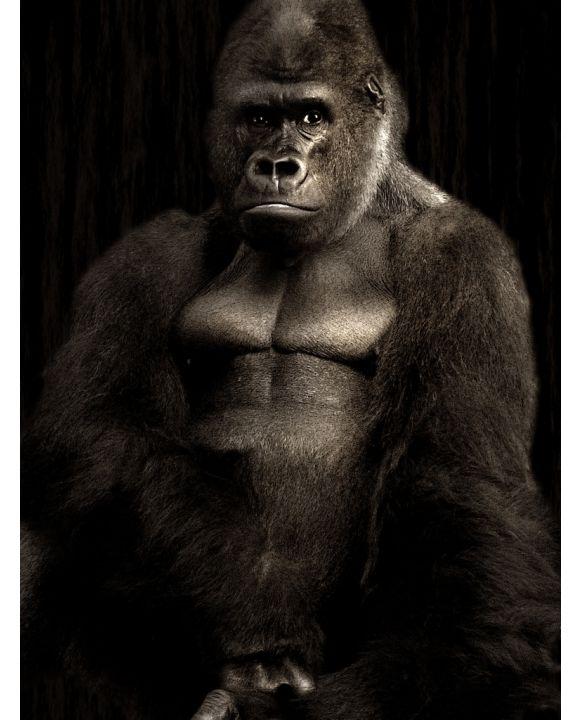 Lais Puzzle - Gorilla - 1.000 Teile