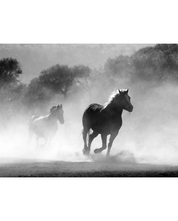 Lais Puzzle - Wilde Pferde - 100, 200, 500, 1.000 & 2.000 Teile