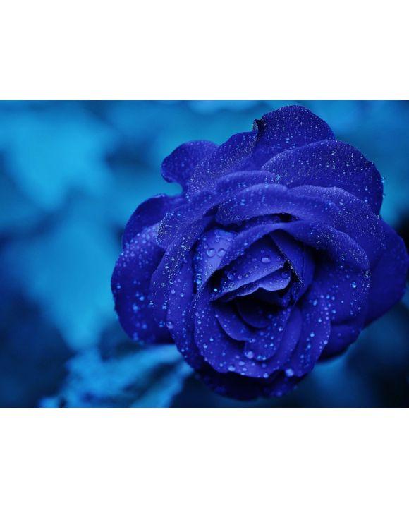 Lais Puzzle - Rose - 100, 200, 500, 1.000 & 2.000 Teile