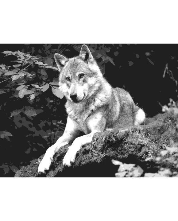 Lais Puzzle - Wolf schwarz weiß - 500 & 1.000 Teile