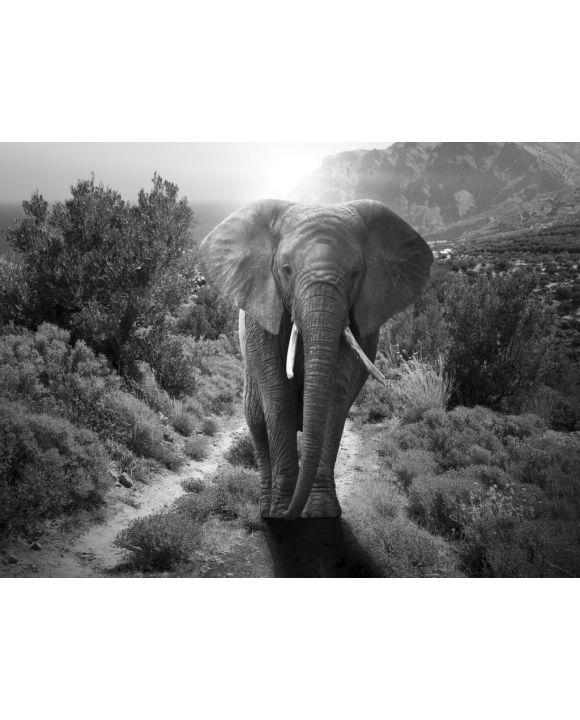 Lais Puzzle - Elefant schwarz weiß - 500 & 1.000 Teile