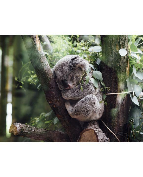 Lais Puzzle - Koala - 100, 200, 500, 1.000 & 2.000 Teile