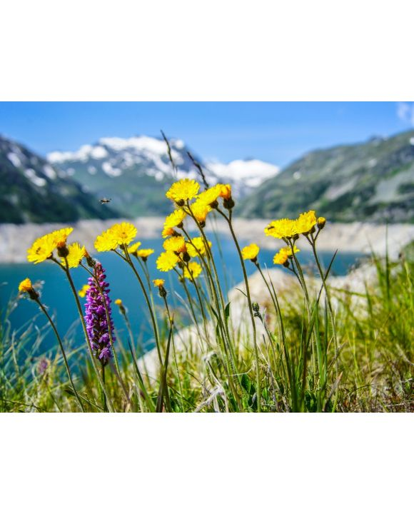 Lais Puzzle - Blumen - 100, 200, 500, 1.000 & 2.000 Teile