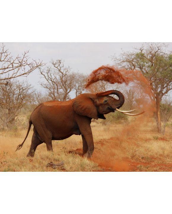Lais Puzzle - Elefanten - 100, 200, 500, 1.000 & 2.000 Teile