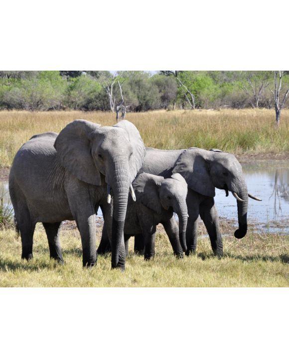Lais Puzzle - Elefanten - 500 Teile