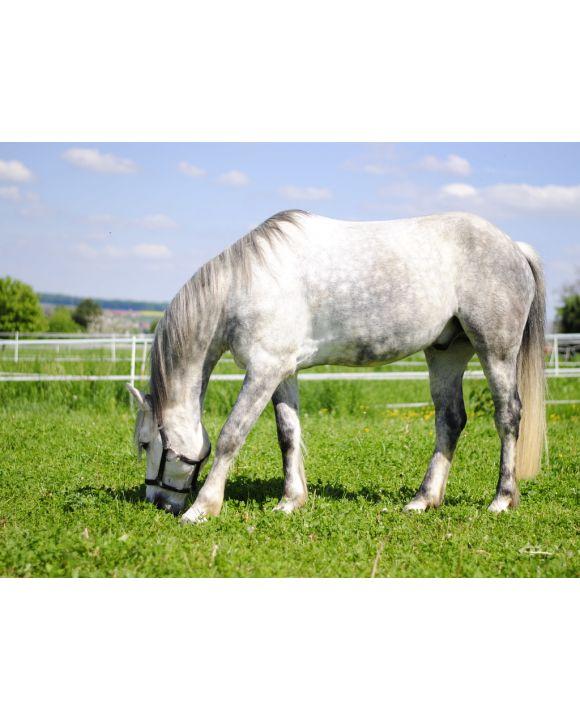 Lais Puzzle - Criollo-Mustang-Mix Pferd - 500 & 1.000 Teile