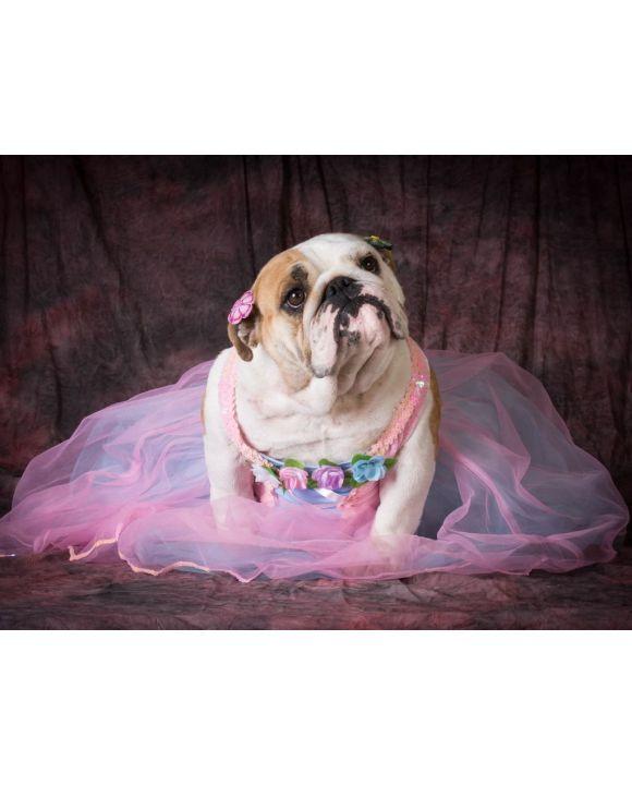 Lais Puzzle - Hund in Kostüm - 100, 200, 500, 1.000 & 2.000 Teile