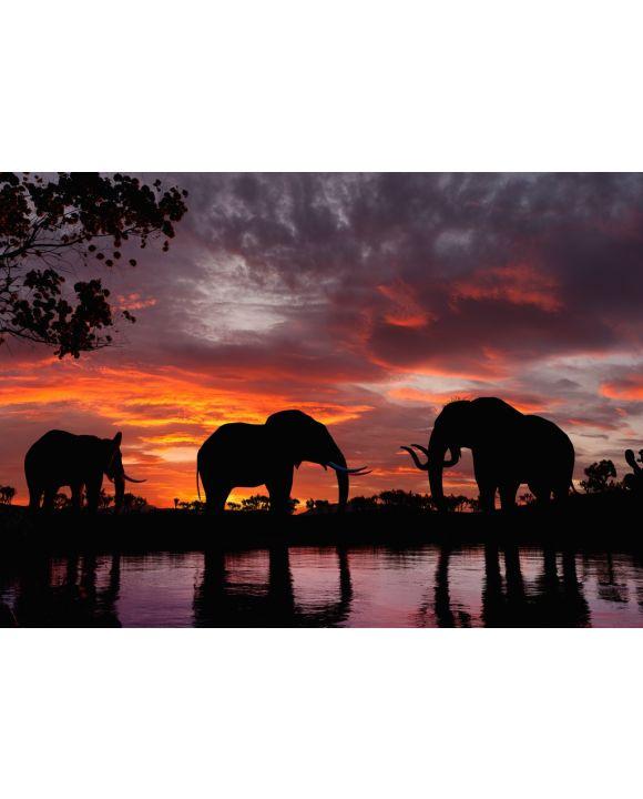 Lais Puzzle - Elefanten im Sonnenuntergang an einem Fluss - 100 & 1.000 Teile