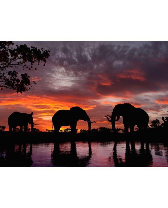 Lais Puzzle - Elefanten im Sonnenuntergang an einem Fluss - 500 & 1.000 Teile