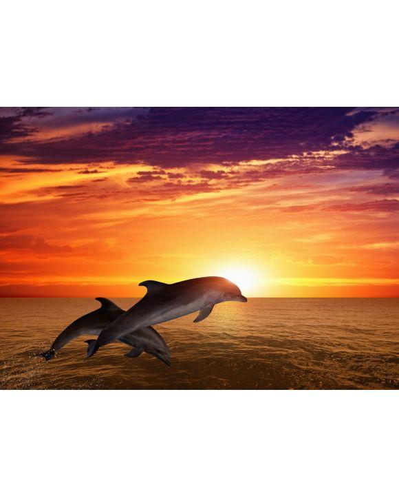 Lais Puzzle - Springende Delfine - 500 & 1.000 Teile