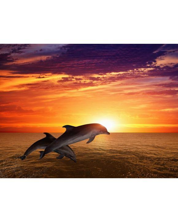 Lais Puzzle - Springende Delfine - 100, 200, 500, 1.000 & 2.000 Teile