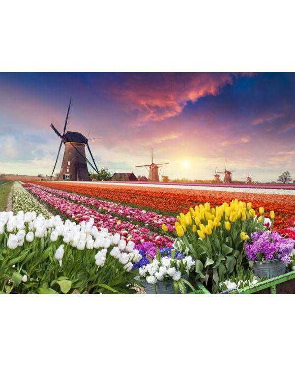 Lais Puzzle - Farbenfroher Sonnenuntergang auf Tulpenfarm in Holland mit Windmühlen - 100, 200, 500, 1.000 & 2.000 Teile