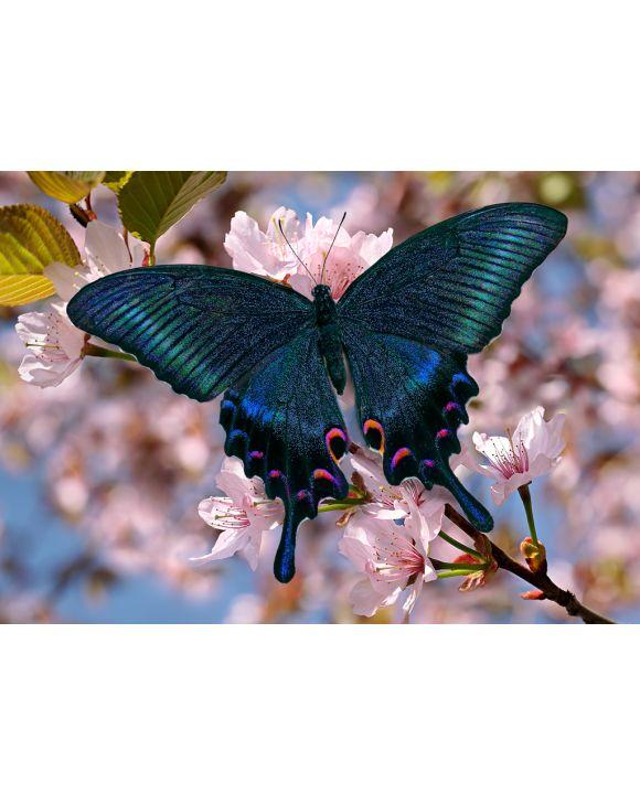 Lais Puzzle - Schwarzer Schmetterling - 100, 200, 500 & 1.000 Teile