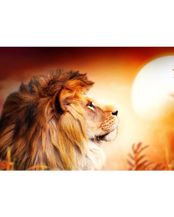 Lais Puzzle - Löwe im Sonnenuntergang - 100, 200, 500 & 1.000 Teile