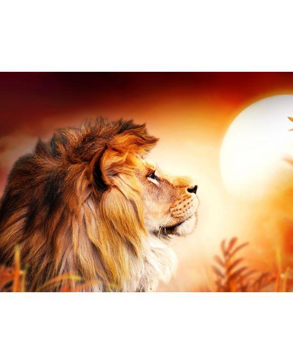 Lais Puzzle - Löwe im Sonnenuntergang - 500 & 1.000 Teile
