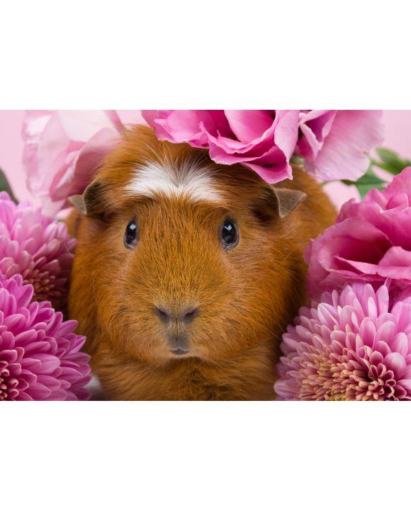 Lais Puzzle - Meerschweinchen in rosa Blumen - 100, 200, 500 & 1.000 Teile