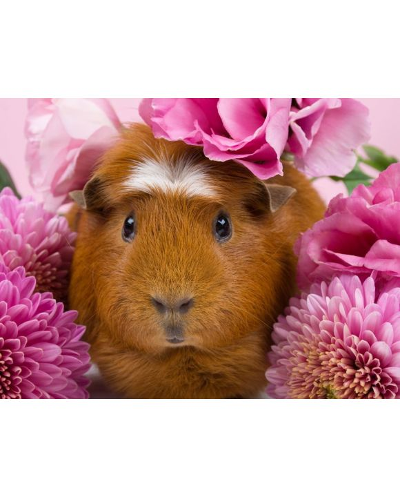 Lais Puzzle - Meerschweinchen in rosa Blumen - 100, 200, 500, 1.000 & 2.000 Teile