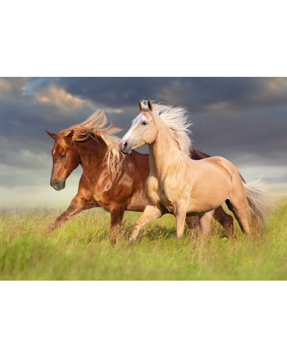 Lais Puzzle - Rotes Pferd und Palominopferd mit langer blonder Mähne in Bewegung auf Feld - 100, 200, 500 & 1.000 Teile