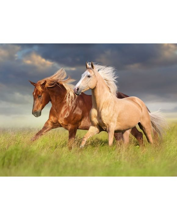 Lais Puzzle - Rotes Pferd und Palominopferd mit langer blonder Mähne in Bewegung auf Feld - 500 & 1.000 Teile