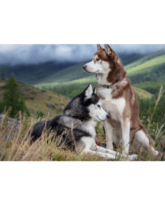 Lais Puzzle - Huskies - 100, 200, 500 & 1.000 Teile