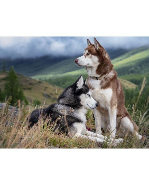 Lais Puzzle - Huskies - 500 & 1.000 Teile