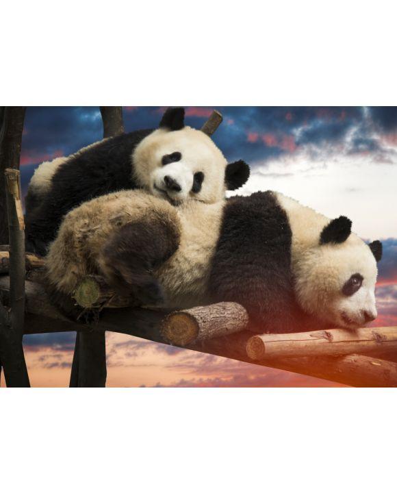 Lais Puzzle - Pandas - 100, 200, 500 & 1.000 Teile