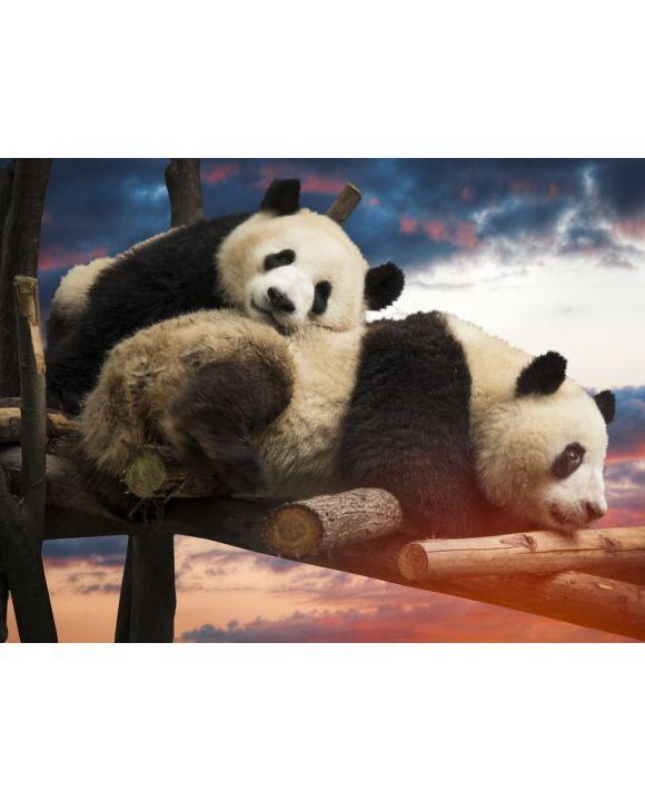 Lais Puzzle - Pandas - 100, 200, 500, 1.000 & 2.000 Teile