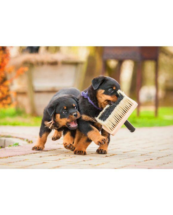 Lais Puzzle - Rottweiler Welpen - 100, 200 & 1.000 Teile