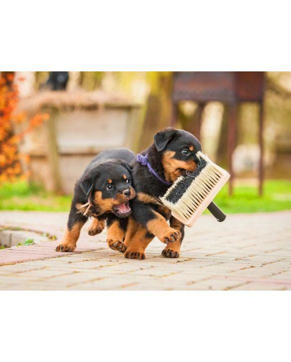 Lais Puzzle - Rottweiler Welpen - 100, 200, 500, 1.000 & 2.000 Teile