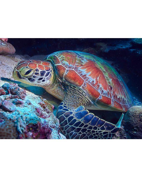 Lais Puzzle - Schildkröte / Wasserschildkröte - 100, 200 & 500 Teile
