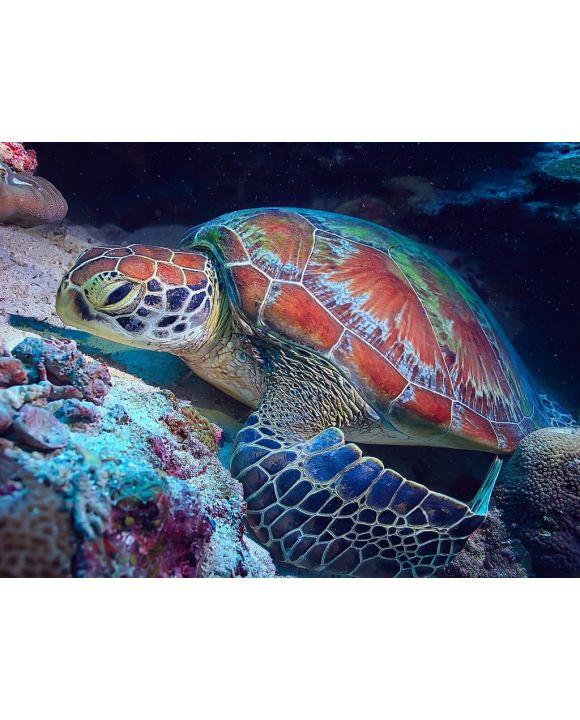 Lais Puzzle - Schildkröte / Wasserschildkröte - 100, 200, 500, 1.000 & 2.000 Teile