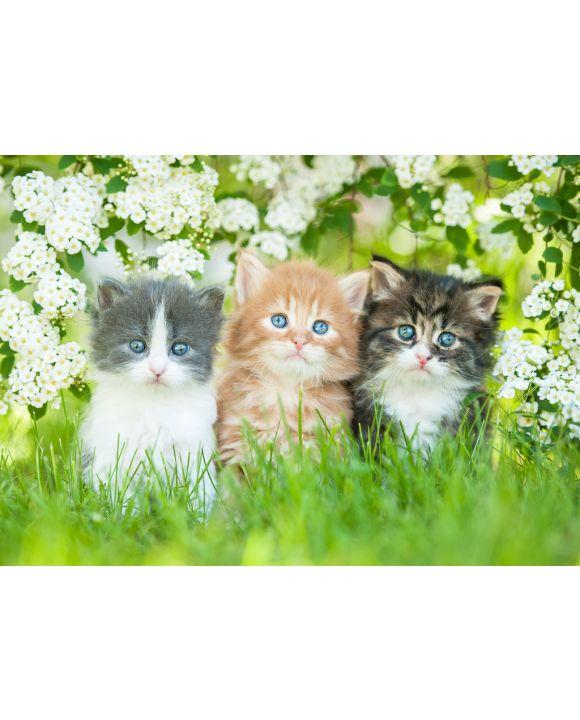 Lais Puzzle - Drei kleine Katzen sitzen nahe weißen Blumen - 100, 200, 500 & 1.000 Teile